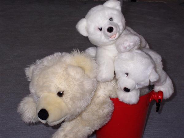 Einbärenfamilie